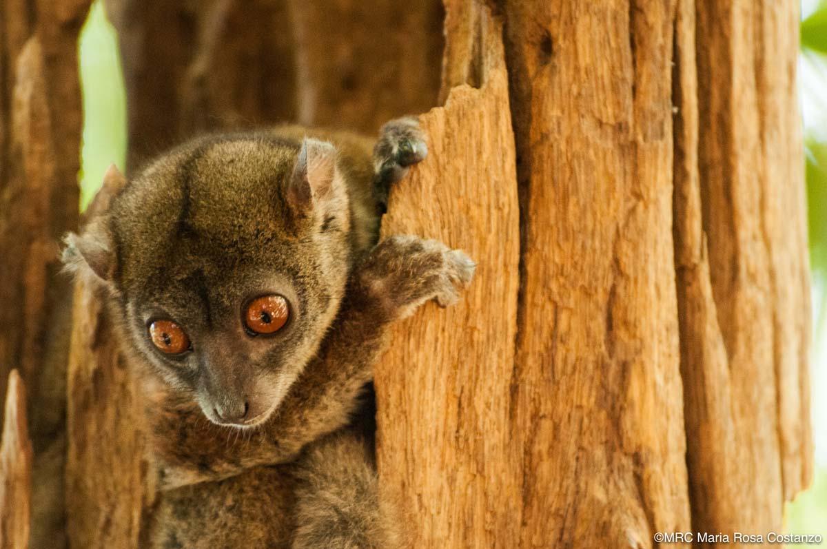 Madagascar-03-MRC-120905-025