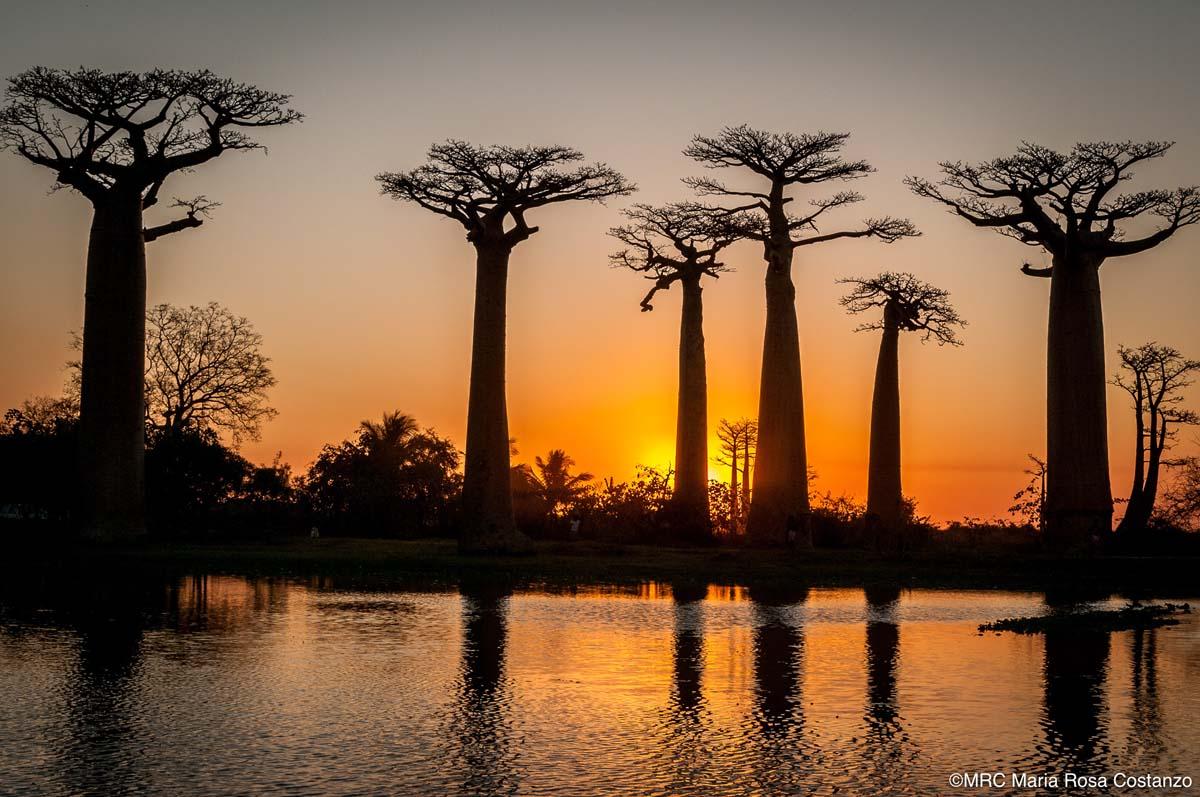 Madagascar-05-MRC-120909-101