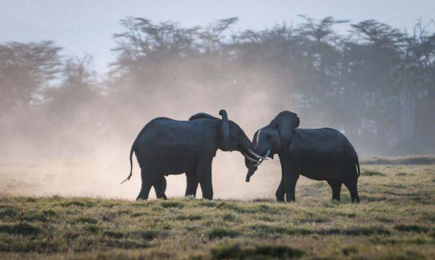 African Safari: Kenya