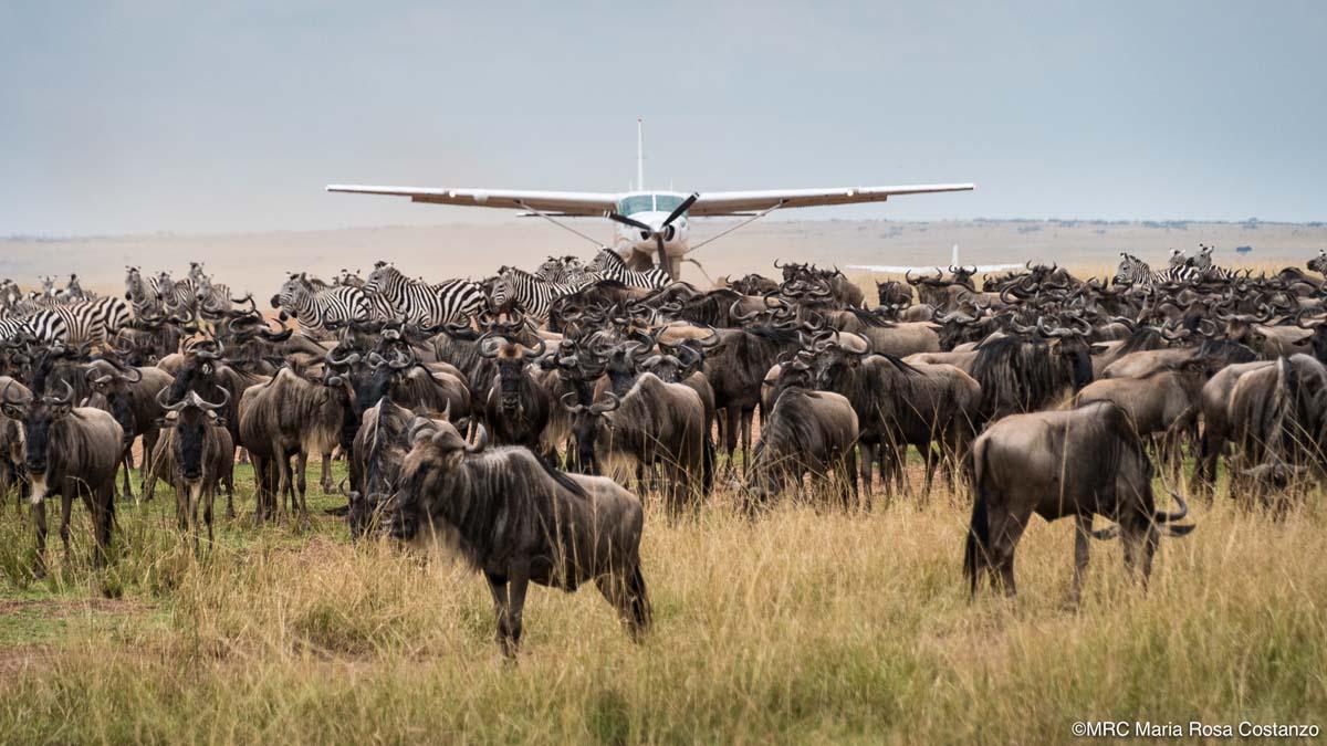 Dr. Maria Rosa Costanzo, Kenya Photo Safari, 2018Dr. Maria Rosa Costanzo, Kenya Photo Safari, 2018