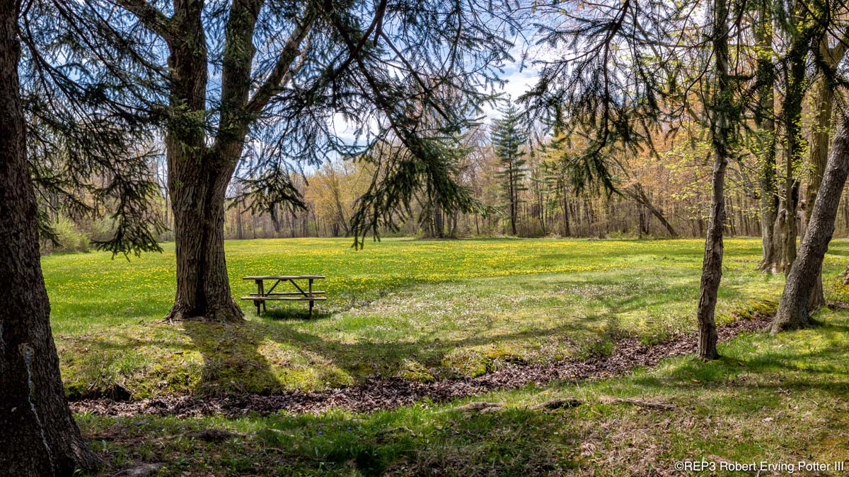 Image of a lone picnic table under a tree beside a meadow filled with yellow dandelions atop grass. All rights reserved: REP3.com Robert Erving Potter III 2020