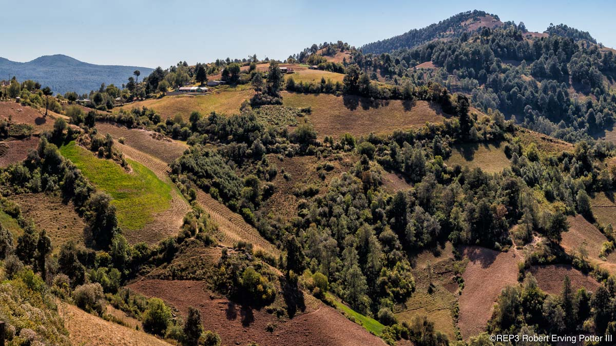 Rolling brown and green, terraced, hills of Guanajuato, Mexico, Fir trees and scrubb oak dot these farmers rolling hills. All rights reserved: REP3.com Robert Erving Potter III 2020